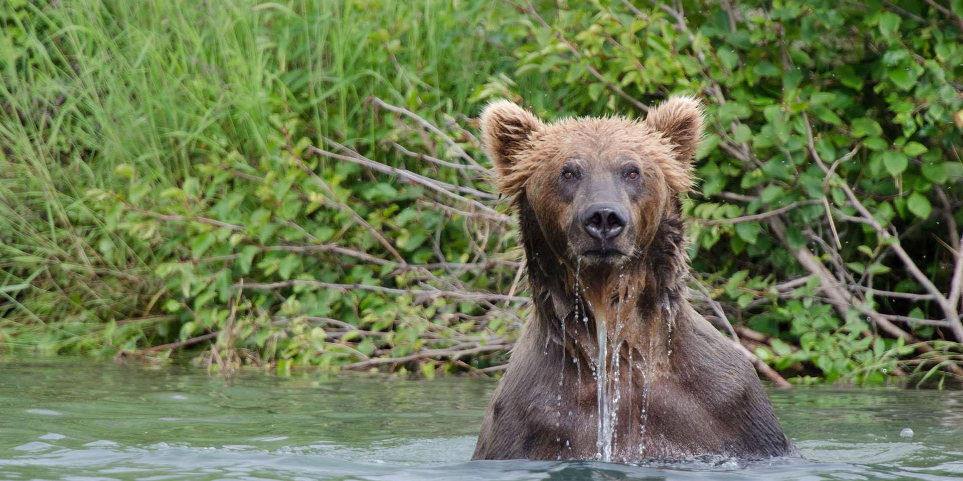 bear meme 04_2x1?1500581480 bear caption generator wild alaska live