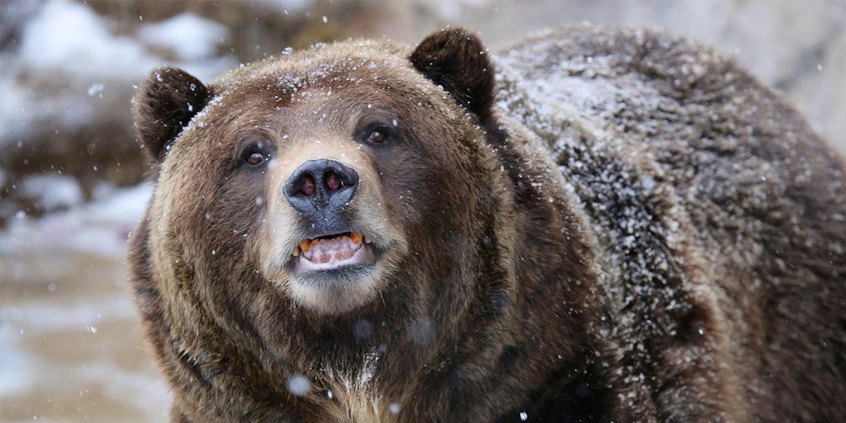 bear meme 07_2x1?1501078192 bear caption generator wild alaska live
