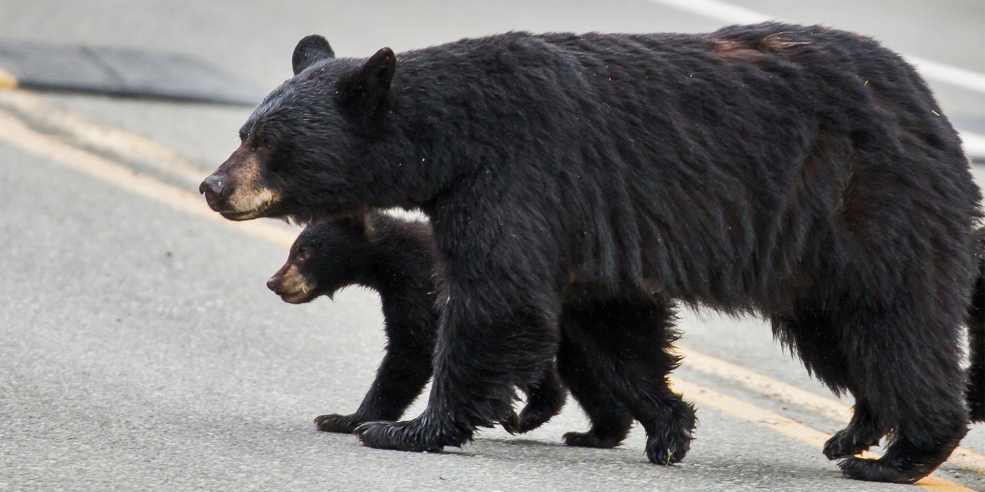 momma-bear_2x1.jpg?1501267259